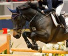 Canadian Olympian Beth Underhill has been appointed to the position of Young Rider Development Program Advisor for Jump Canada.