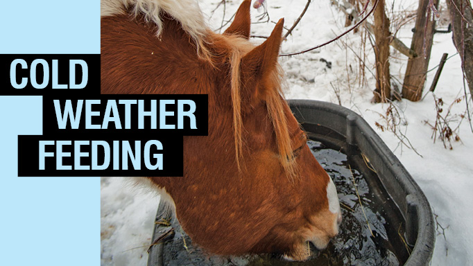 Thumbnail for Cold Weather Feeding Advice