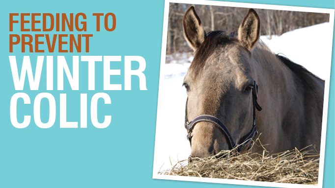 Thumbnail for Feeding to Prevent Winter Colic