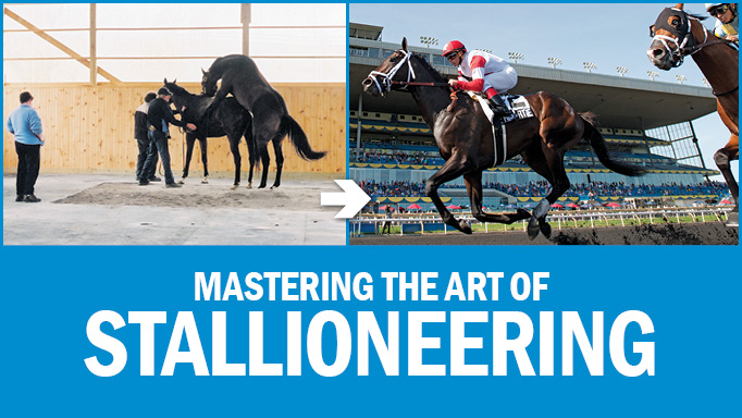Thumbnail for Mastering The Art of Stallioneering