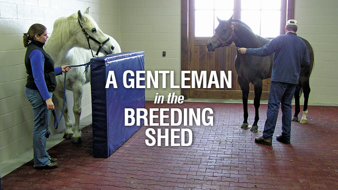 Thumbnail for Training the Novice Stud to a Phantom Mare