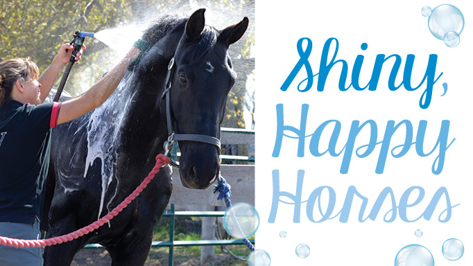Thumbnail for Shiny, Happy Horses