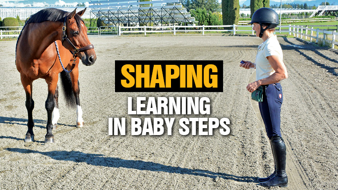 Thumbnail for Shaping: Learning in Baby Steps