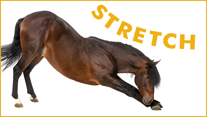 Thumbnail for 8 Simple Stretches for Your Horse