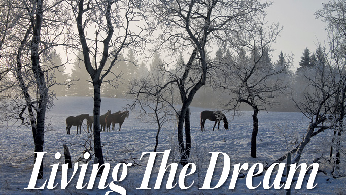 Thumbnail for Ziprick Thoroughbreds: Living the Dream