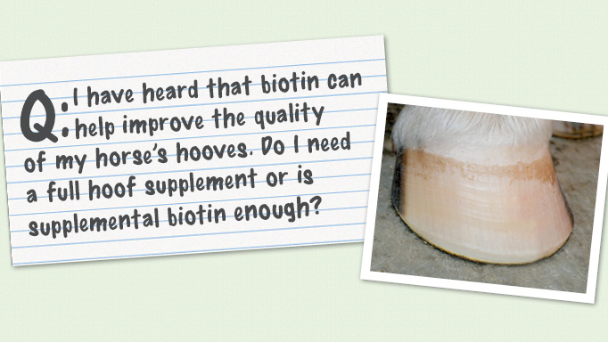 Thumbnail for Feeding Biotin for Hoof Health