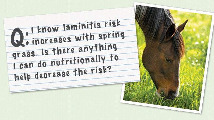 Thumbnail for Decreasing the Risk of Laminitis in the Spring