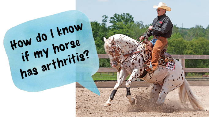 Thumbnail for Diagnosing Arthritis in Your Horse