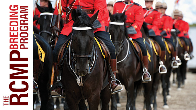 Thumbnail for RCMP Breeding Program