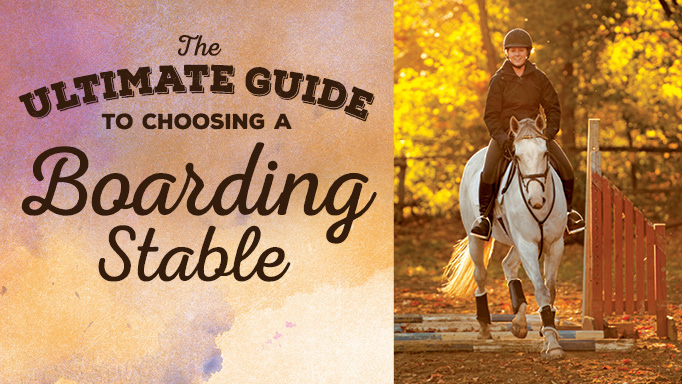 Thumbnail for The Ultimate Guide to Choosing a Boarding Stable