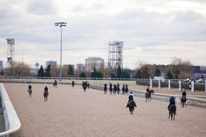 Training on Woodbine's brand new Tapeta main track commenced on March 18th.