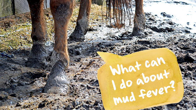 Thumbnail for What Can I Do About Mud Fever?