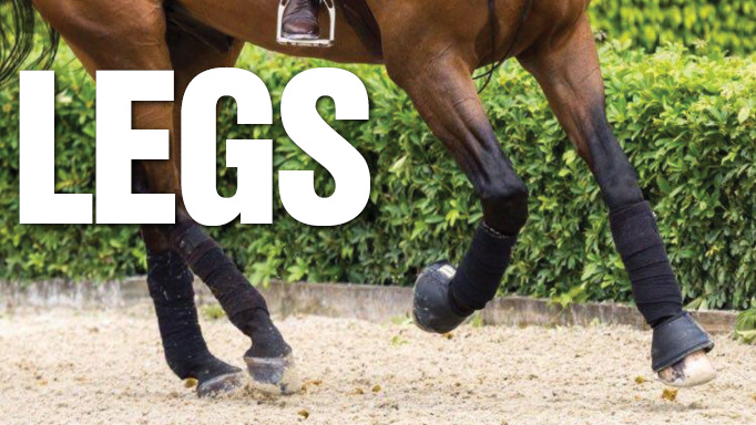 Thumbnail for Competition Leg Care with Tiffany Foster