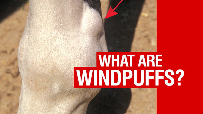 Thumbnail for What are Windpuffs?