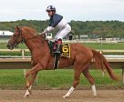 Justin Stein, shown here aboard Stormy Lord, is retiring as a jockey after 12 years.
