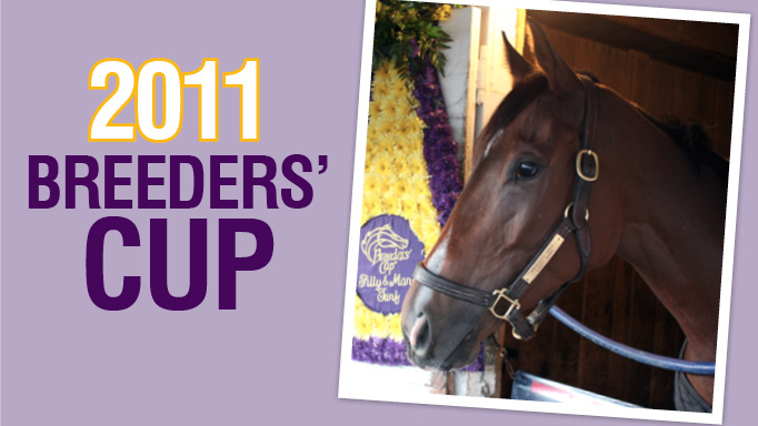 Thumbnail for Perfect Shirl, Sadler's Wells, Mr. Prospector Lines Shine at 2011 Breeders' Cup