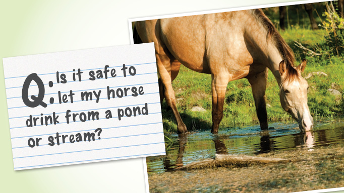Thumbnail for Is it safe to let my horse drink from a pond or stream?