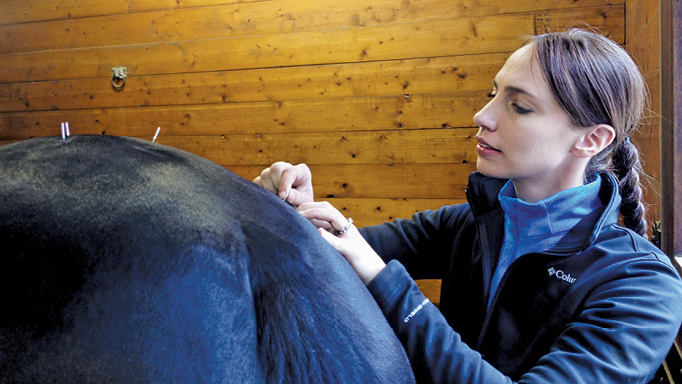 Thumbnail for Getting to the Point: Equine Acupuncture
