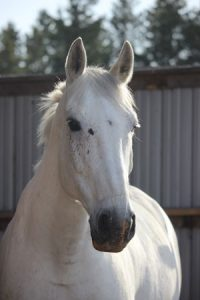 How can any horse compete with this handsome boy?