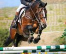 John Pearce and Chantico won the $30,000 Blenheim June Classic I Grand Prix. Photos by McCool