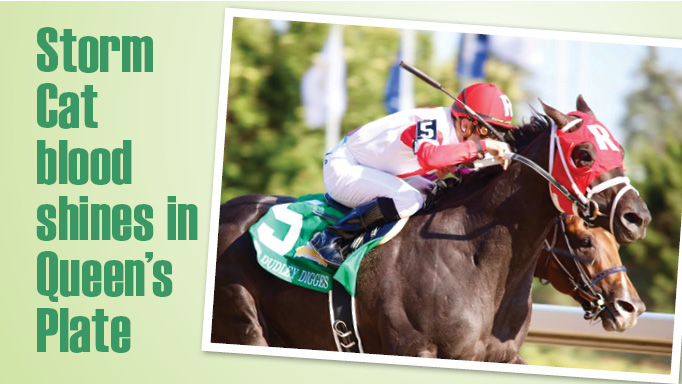 Thumbnail for Storm Cat Blood Shines in Queen's Plate