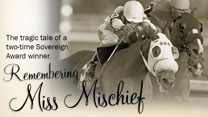 Thumbnail for Remembering Miss Mischief