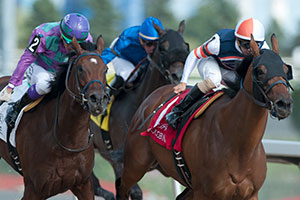 Rafael Hernandez guides Midnight Miley to victory in the $150,000 Seaway Stakes at Woodbine. Photo by Michael Burns Photography