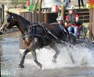 Anika Geiger (GER) was the runner-up in the marathon of the Young Drivers Single Horse class and won gold thanks to her dressage victory and good cones round Photo by FEI/dr. Jürgen Schwarzl