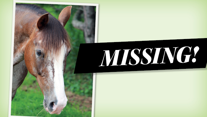 Thumbnail for Missing: A Horse Escape Tale