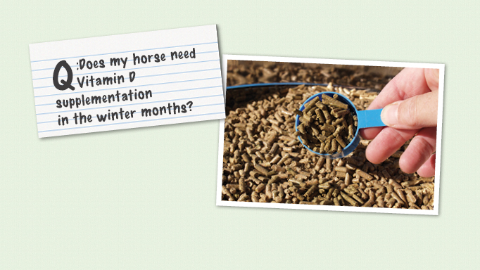 Thumbnail for Does My Horse Need Vitamin D in the Winter?
