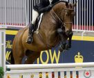 Mackenzie Wray, 17, from Loretto, ON won the 2016 Jump Canada Medal Final, held Nov. 8, 2016 at the Royal Horse Show in Toronto, ON. Photo by Cealy Tetley