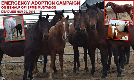 Thumbnail for More Than 800 Mustangs At Risk of Slaughter