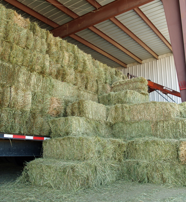 Thumbnail for AEF Sending 1,500 Bales of Hay for Fort McMurray Equines