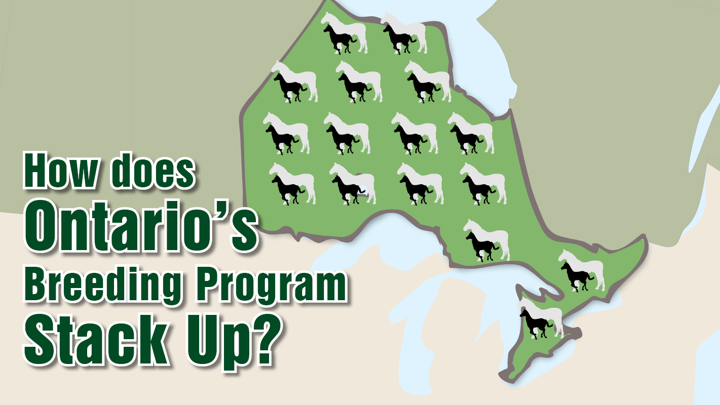 Thumbnail for How Does Ontario's Breeding Program Stack Up?