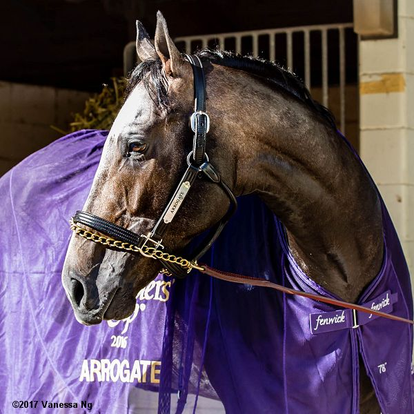 pegasus17-th-arrogate2