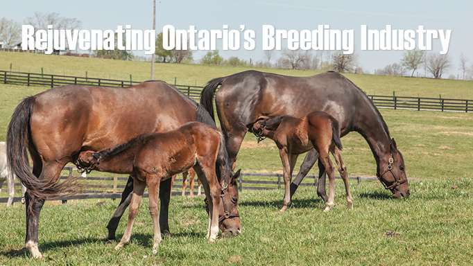 Thumbnail for Rejuvenating Ontario's Breeding Industry