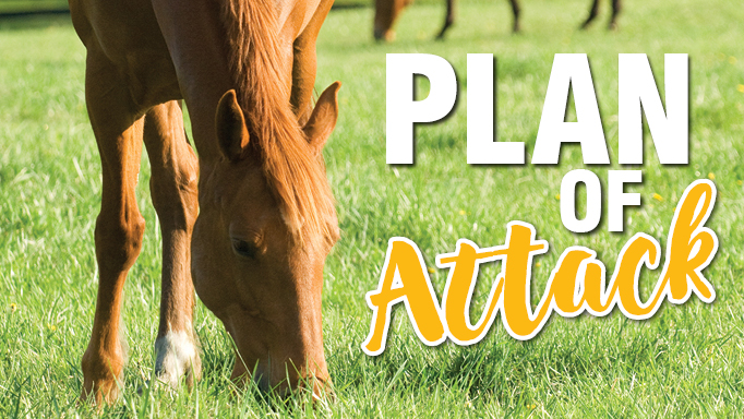Thumbnail for Best Ways to Control Internal Parasites
