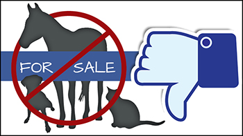 Thumbnail for Facebook Cracks Down on Animal Sale Posts