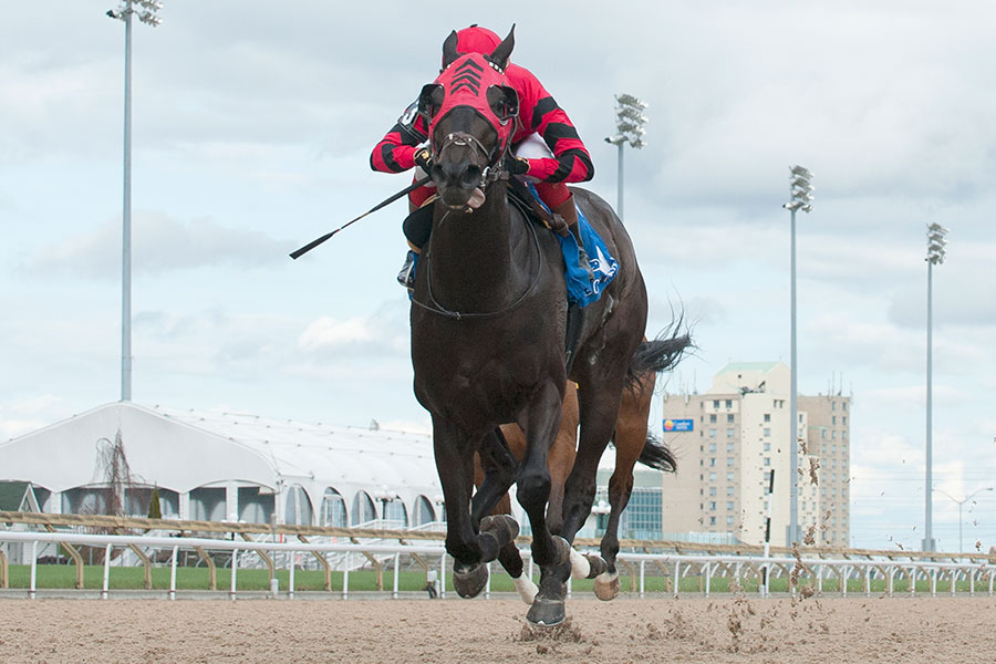 Luis Contreras guides R Naja to victory in the $100,000 Star Shoot Stakes at Woodbine Racetrack. Photo by Michael Burns