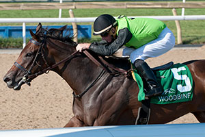 Gary Boulanger guides Moonlit Promise to victory in the $125,000 La Lorgnette Stakes at Woodbine. Photo by Michael Burns