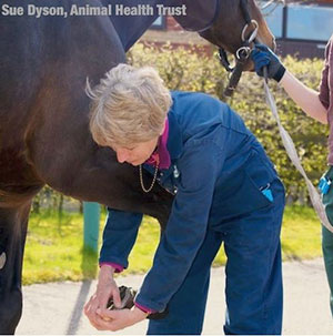 Dr. Sue Dyson MA, VetMB, PhD, DEO, FRCVS Head of Clinical Orthopaedics - Centre of Equine Studies, Animal Health Trust – Newmarket, UK