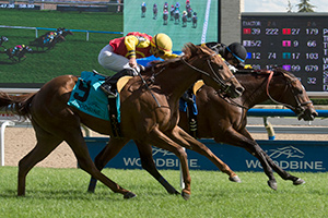 David Moran guided Katalox to victory in the $125,000 Bold Ruckus Stakes at Woodbine. Photo by Michael Burns