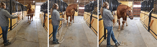 This horse backed up until the Slide Rope cross ties became taught, my hands remained soft, no pulling needed by the handler. Once he looked behind himself at the scary door he was then able to relax and responded to the pressure by stepping forward again, creating his own release.