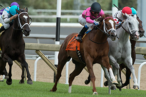Patrick Husbands guides Conquest Panthera (pink silks) to victory in the $175,000 Play the King Stakes. Photo by Michael Burns