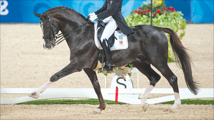 Thumbnail for Dressage Conformation