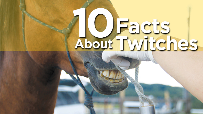 Thumbnail for 10 Facts About Twitches