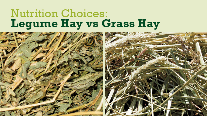Thumbnail for Legume Hay vs Grass Hay