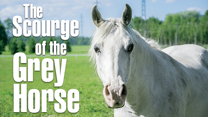 Thumbnail for Equine Melanoma: The Scourge of the Grey Horse