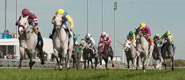 Arthur's Pass (9) edges out Gray Phantom (10) in Woodbine's inaugural $50,000 Grey Handicap on Sunday, Oct. 1. Photo by Michael Burns Photography