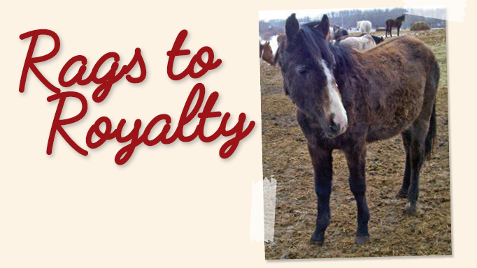 Thumbnail for #TeamBeauty: The Story of a Rescue Pony